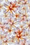 Плитка для стен Kerama Marazzi Эйвон Цветы 8243 20х30