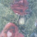 Декор Kerama Marazzi Весеннее шоу Розы NT\A95\5155 20х20