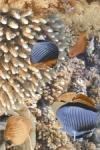 Вставка Golden Tile Agat голубой И33321 250х400